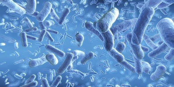 Tăng cân an toàn, hiệu quả với một số chủng probiotic này