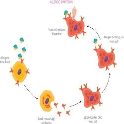 Điều trị viêm mũi dị ứng bằng probiotic