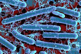 5 lợi ích sức khỏe từ men vi sinh Lactobacillus Acidophilus